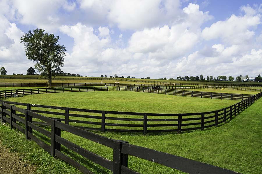 Louisville KY - Landscape Of Horse Ranch In Louisville Kentucky
